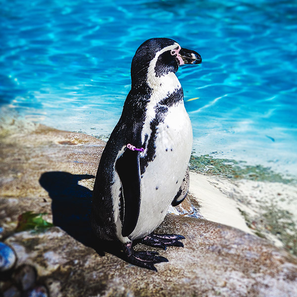 Penguins are so Cool!