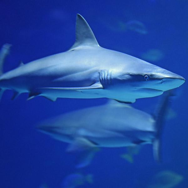 Shark Aware Week